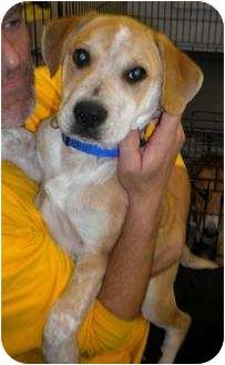 Hound (Unknown Type) Mix Dog for adoption in Humble, Texas - Buster
