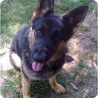 Adopt A Pet :: King - Pike Road, AL