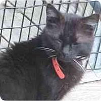 Adopt A Pet :: Batley - Lunenburg, MA