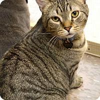 Adopt A Pet :: Tito - Byron Center, MI