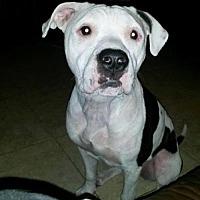 Adopt A Pet :: Hope & Keller (Bonded Pair) - Tampa, FL