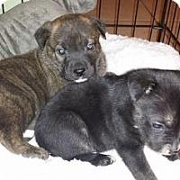 Adopt A Pet :: Wyatt - ROME, NY