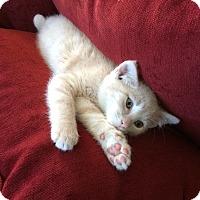 Adopt A Pet :: Ancho - Colmar, PA