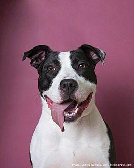 Terrier (Unknown Type, Medium) Mix Dog for adoption in Brookhaven, New York - Bessie