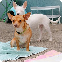 Adopt A Pet :: Ruby - Eugene, OR