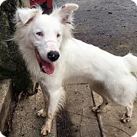 Adopt A Pet :: Marty - Post Falls, ID