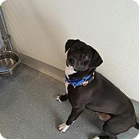 Adopt A Pet :: FRANKIE - Sandusky, OH
