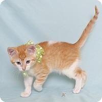 Adopt A Pet :: JC - Kerrville, TX