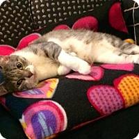 Adopt A Pet :: Myla - Trenton, NJ