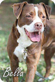 Mixed Breed (Medium) Mix Dog for adoption in Jacksonville, Florida - Bella