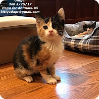 Adopt A Pet :: Ginger - Marlboro, NJ