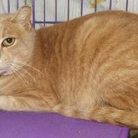 Adopt A Pet :: Beethoven - Orleans, VT