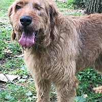 Adopt A Pet :: Dougie - Sooooo Nice - Capon Bridge, WV