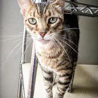 Adopt A Pet :: Thackary - Fredericksburg, TX