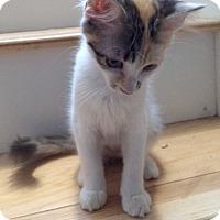 Adopt A Pet :: ROGUE - HILLSBORO, OR
