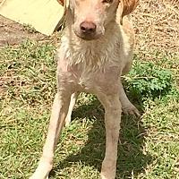 Adopt A Pet :: #4 - Seguin, TX