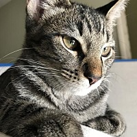 Adopt A Pet :: Monkey - Santa Monica, CA