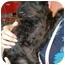 Photo 2 - Schnauzer (Miniature) Mix Dog for adoption in Humble, Texas - Little Black Dog