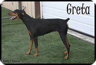 Doberman Pinscher Dog for adoption in Rockwall, Texas - Greta