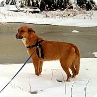Adopt A Pet :: Tanner - McKinney, TX