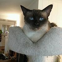 Adopt A Pet :: Emo - Burbank, CA