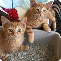 Adopt A Pet :: Bronx - Horsham, PA