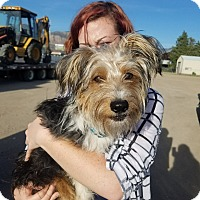 Adopt A Pet :: Beau - Ogden, UT