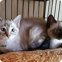 Adopt A Pet :: Lupe - Portland, OR