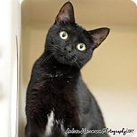 Adopt A Pet :: Aries - East Hartford, CT