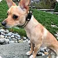Adopt A Pet :: Peanut - Bridgewater, NJ