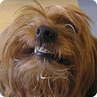 Adopt A Pet :: Lucille - Cross Roads, TX