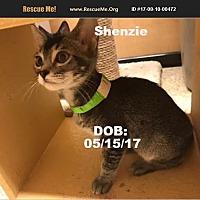 Adopt A Pet :: Shenzie - Chandler, AZ