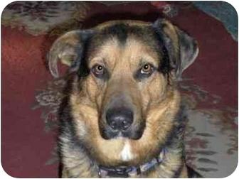 German Shepherd Dog/Shepherd (Unknown Type) Mix Dog for adoption in Northville, Michigan - Ben