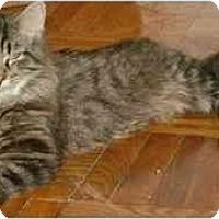Adopt A Pet :: Sammy - Etobicoke, ON