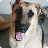 Adopt A Pet :: Kyra - Canoga Park, CA