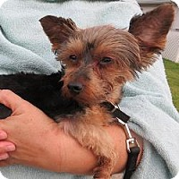 Adopt A Pet :: Simon - Leesburg, FL