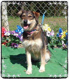 Airedale Terrier Mix Dog for adoption in Marietta, Georgia - STELLA