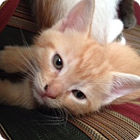 Adopt A Pet :: Autumn - Piscataway, NJ