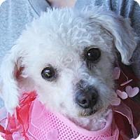 Adopt A Pet :: Princess Pudding - La Costa, CA