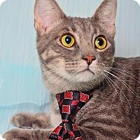 Adopt A Pet :: Donnie - Chicago, IL