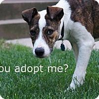 Adopt A Pet :: Ivy - Davenport, IA