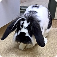 Adopt A Pet :: 1705-1779 Panda - Virginia Beach, VA