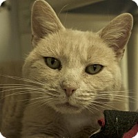 Adopt A Pet :: Maisey - Potsdam, NY