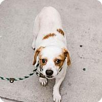 Adopt A Pet :: Tar - Chino Hills - Chino Hills, CA