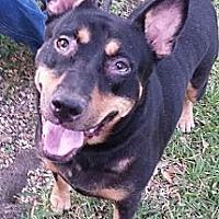 Adopt A Pet :: Rika - Selbyville, DE