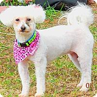 Adopt A Pet :: Blossom - Osseo, MN