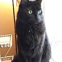 Adopt A Pet :: Rocket - Oxford, CT