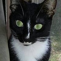 Adopt A Pet :: ♥ Prank ♥ - Middleburg, FL