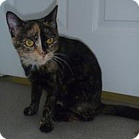 Adopt A Pet :: Sheera - Hamburg, NY