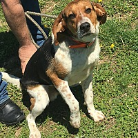 Adopt A Pet :: Sebastian - Loogootee, IN